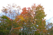 木々の色付き1