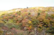 木々の色付き2
